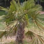 Poză de profil pentru CRISTI